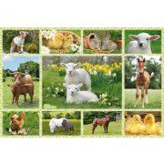 Baby Farm Animals, 100 db (56194)
