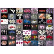 Floral Greeting, 2000 db (58297)