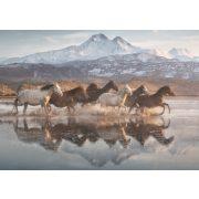 Pferde in Kappadokien, 1000 db  (58376)