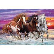 Trio of wild horses, 200 db (56356)